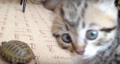 Fuzzy Little Kitten Notices Animal He's Never Seen Before…His Reaction Is Just PRICELESS.