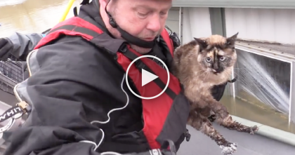 Cat Astonishes Rescuers When They Discover The Unthinkable…Floating Where They'd Least Expect