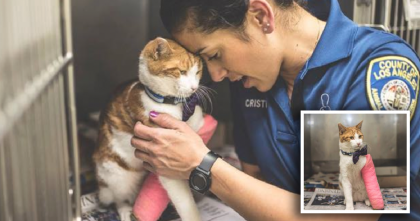 Cat Ended Up In A Kill Shelter With Only Minutes To Live, But Then A Miracle Happened…