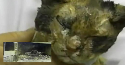 Cat Mom Rushes Into Fire 5 Times, But The Reason Why Proves The Power Of True Love… WOW.