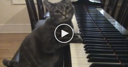Cat Watches His Owners Teach Piano Lessons, But You Won't Believe What Happening Now?!