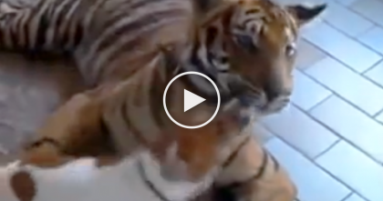 Dog Runs STRAIGHT Into This Big Cat's Mouth, Wait 5 Seconds And… Oh. My. Goodness.