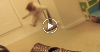 Funny Cats Startle Each Other, Then Retaliate In The Funniest Way Ever… Just WATCH, Hilarious!!