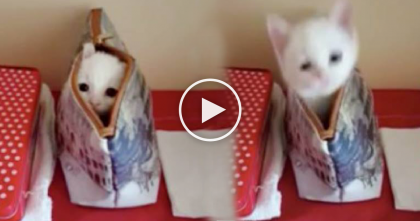 Furry Kitty Peeks Out To Surprises Owner, The Best Part Comes Next… Just Watch!