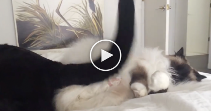 He's Sleeping, But Wakes Up To An 'Annoying' Surprise…What He Does? Awwww, It's Kitty Love!!