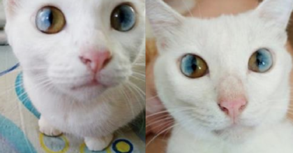 Cat Has Rare Eye Condition, But Just Take A Closer Look…Most Beautiful Eyes Ever, WOW.
