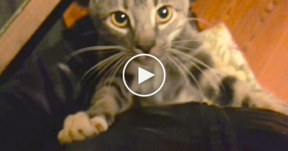 Human Tries To Leave For Work, But Kitty Refuses With Hugs…You Gotta See The Reaction, Adorable!!