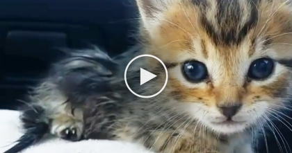 Kitten Found On Road Looked To Be Dead, But When They Brought Him Home… Amazing!