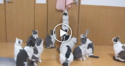 Kitties Taking Turns With The Mysterious New Fluffy Toy, But Then… SOO Cute!!