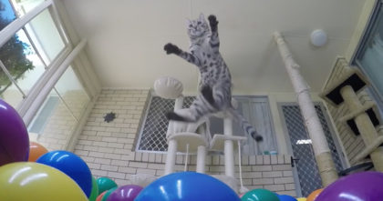 Kitty Discovers Colorful Mini-Ball-Pit For The First Time And The Camera Records His Adorable Reaction!