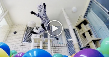 Kitty Discovers Colorful Mini-Ball-Pit For The First Time…You Won't Want To Miss His Reaction!