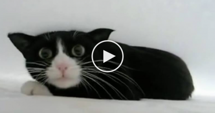 Kitty Discovers The Bedsheets For The First Time, Then Goes Absolutely Nuts…LOL, Watch!