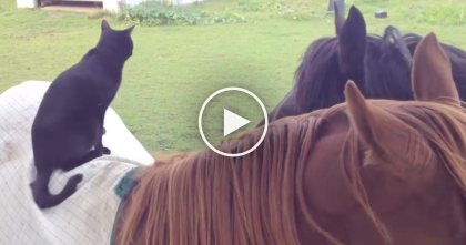Kitty Hops On His New Friend, But Just Watch… He Doesn't Even Want To Leave, Awwww!