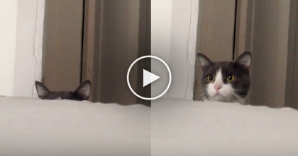 Kitty Tries To Spy On The World, But His Attempt Are Captured On Camera… SOO Funny!!