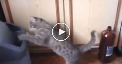 Kitty Uses His Power-Paws To Defeat The Trash Can In Epic Battle You Can't Miss, Just Watch!!