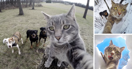 Meet Manny: The Adventurous Kitty Who Takes Selfies, Then Posts Them On The Internet!