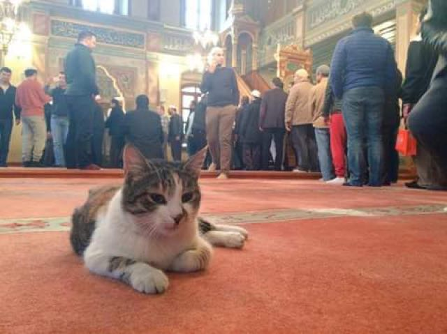 mosque-kitties