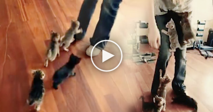 Six Tiny Little Kittens Refuse To Leave Their Human Alone… They Just Won't Stop, CUTE!!