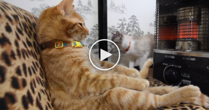 Smart Cat Knows How To Live Life In Style…And He NEVER Wants To Leave The Warmth, Ahhhh!