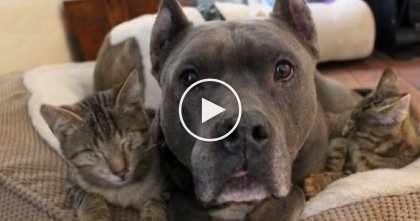 Something Horrible Happened To These Kittens, Then They Met Someone Very Special…