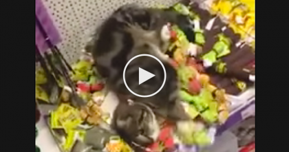Pet Store Employee Discovers Huge Mess In The Catnip Section…But Then Finds The Reason Why!