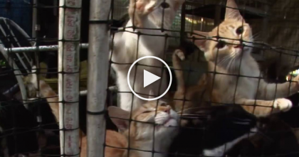 They Discovered Over 700+ Cats In The Most Unbelievable Conditions You'll Ever See… OMG.