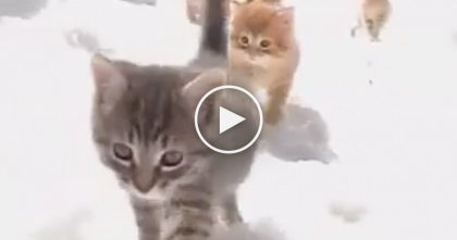 They Let The Kittens Outside To Discover The 'Winter Wonder Land'… The Results Are TOO Cute!!