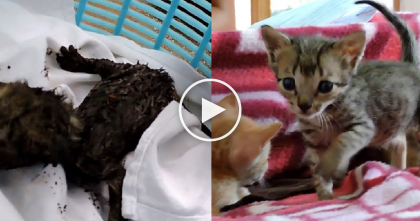 Trapped Newborn Kittens Desperately Meowing For Help, Then Rescued From Exhaust Duct…