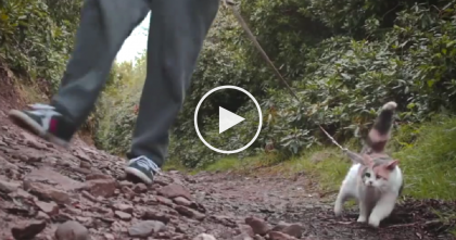 Blind Cat Rejected At Shelter, But Then Someone Noticed Her… Now Watch What She's Can Do.