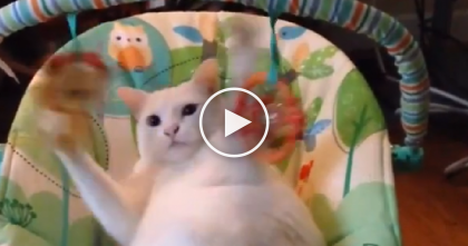 Cat Discovers Baby Swing In Living Room, But Just Can't Get Enough Of It, LOL… Just Watch!!