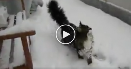 Cat Reacts When He Discovers Snow Outside, But Then Goes Completely Crazy… TOO Funny!!