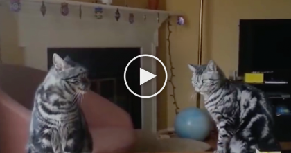 Cats Know How To Clean Stuff Up… Now Watch How They Do It, This Is Just HILARIOUS.