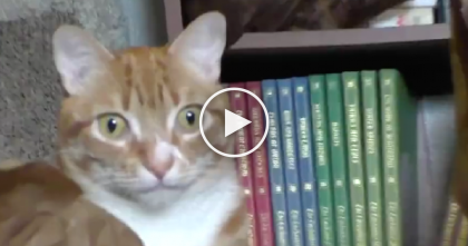 Cats Notice Funny Coin-Stealing Kitty Piggy Bank, But The Look On Their Face When They See…