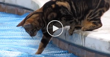 "Curious Cat Doesn't Mind Getting Paws Wet, But His Expression… ""If Only I Could Walk On Water"""