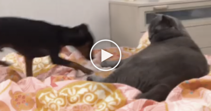Doggie Walks Over To Sleep With The Cat, But WATCH His Reaction… It's Just HILARIOUS.
