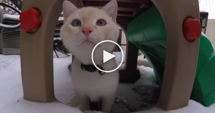 Frozen Kitten Stuck To Ground, Received Kitty CPR…Now You Won't Believe What He's Doing.
