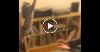 He Throws The Ball, But Keep Your Eyes On The Kitten… See What Happens Next? Whoa!