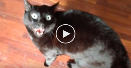 He's Petting A Cat Outside, But When The Other Cat Discovers It…Now Watch What The Black Cat Does.