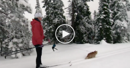 He Went Out To Go Skiing, But When You See What This Cat Is Doing… Are You Serious?!
