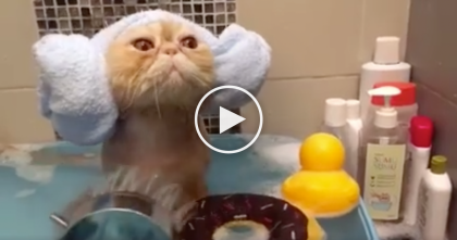 Cat Goes For A Bath, But When You See Her Face… I'm Shocked, Can You Believe It??