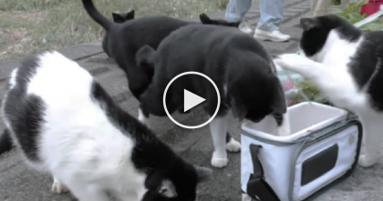 Fisherman On Island Befriends Stray Cats. Now Watch What This Guy Does For Them…
