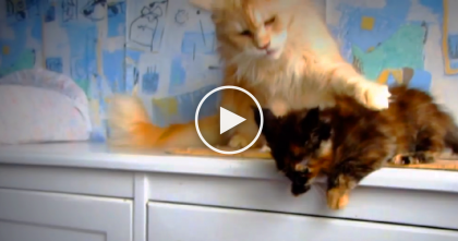 Kitten Is About To Jump, But Protective Cat Mom Has Stern Words Of Instruction… Just WATCH.