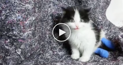 Little Kittens Tortured By Thugs And Left In Wet Cardboard Box To Die… I Can't Believe This?!