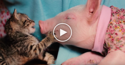 Orphaned Little Kitten Bonds With Unlikely Friend, Just Wait Till You See Them Now… OMG!!
