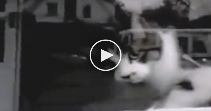 "Playful Cat Makes Mailman's Job ""Difficult"" When He Tries To Deliver The Mail… Just WATCH."
