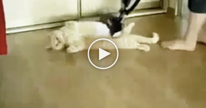 She Goes To Vacuum The Floor, But Just Watch What She Does To The Cat… HILARIOUS.