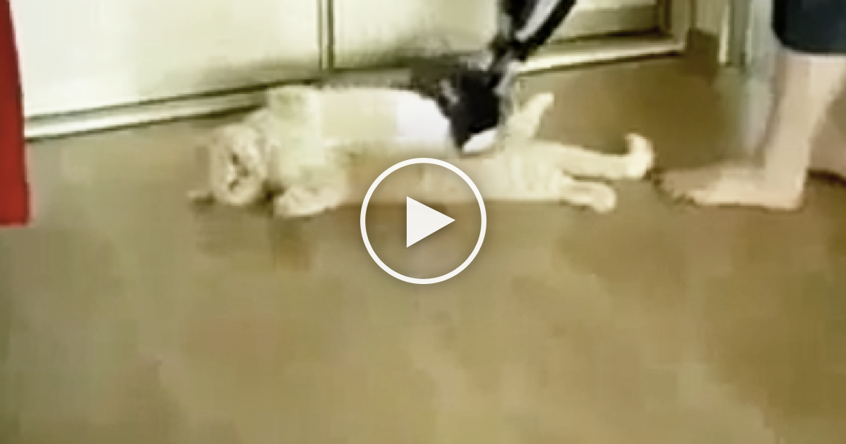 Cat Keeps Cleaning Himself Too Much