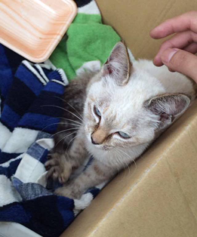 stray-kitten-finds-home