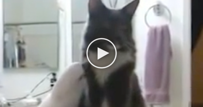 Sweet Kitty Standing By His Special Birdie Friend, But Then They Record A Special Moment…