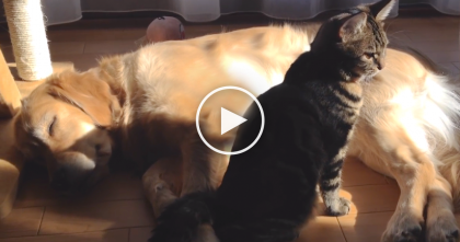 Tabby Cat Sleeping With Doggy, But When He Goes To Itch Himself… Just Keep Watching, Awwww!!